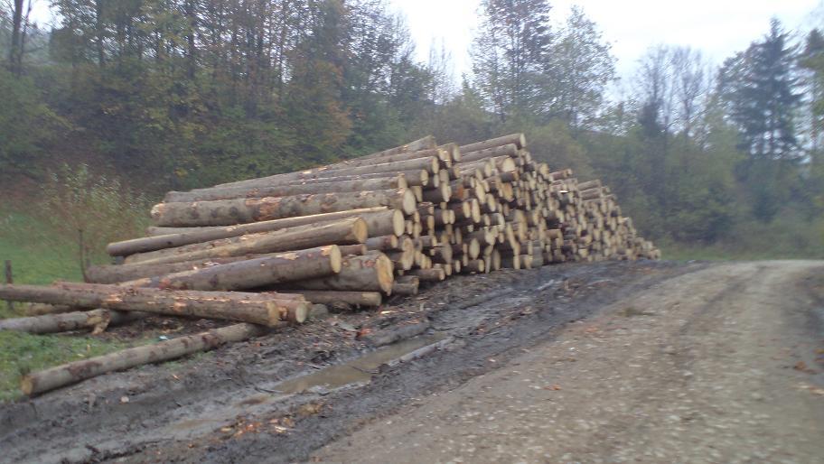 Федір Щубер. Про лісозаготівлю в Студеному